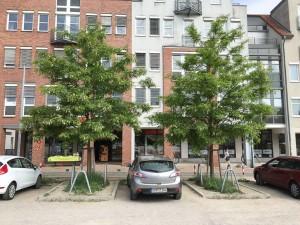 Guerilla Gardening Rostock (1)